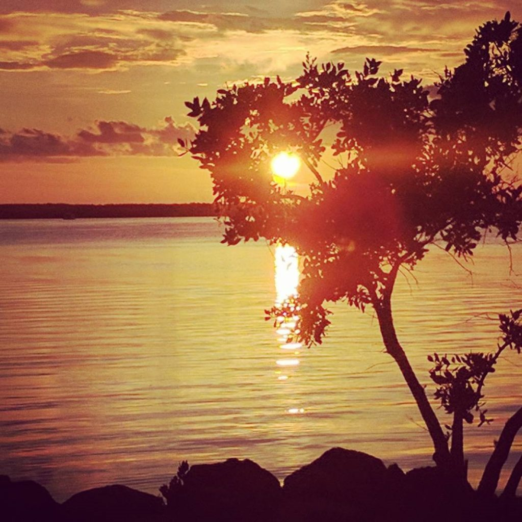The sun begins to set in a golden yellow sky seen through tree leaves at the Keys in Key Largo