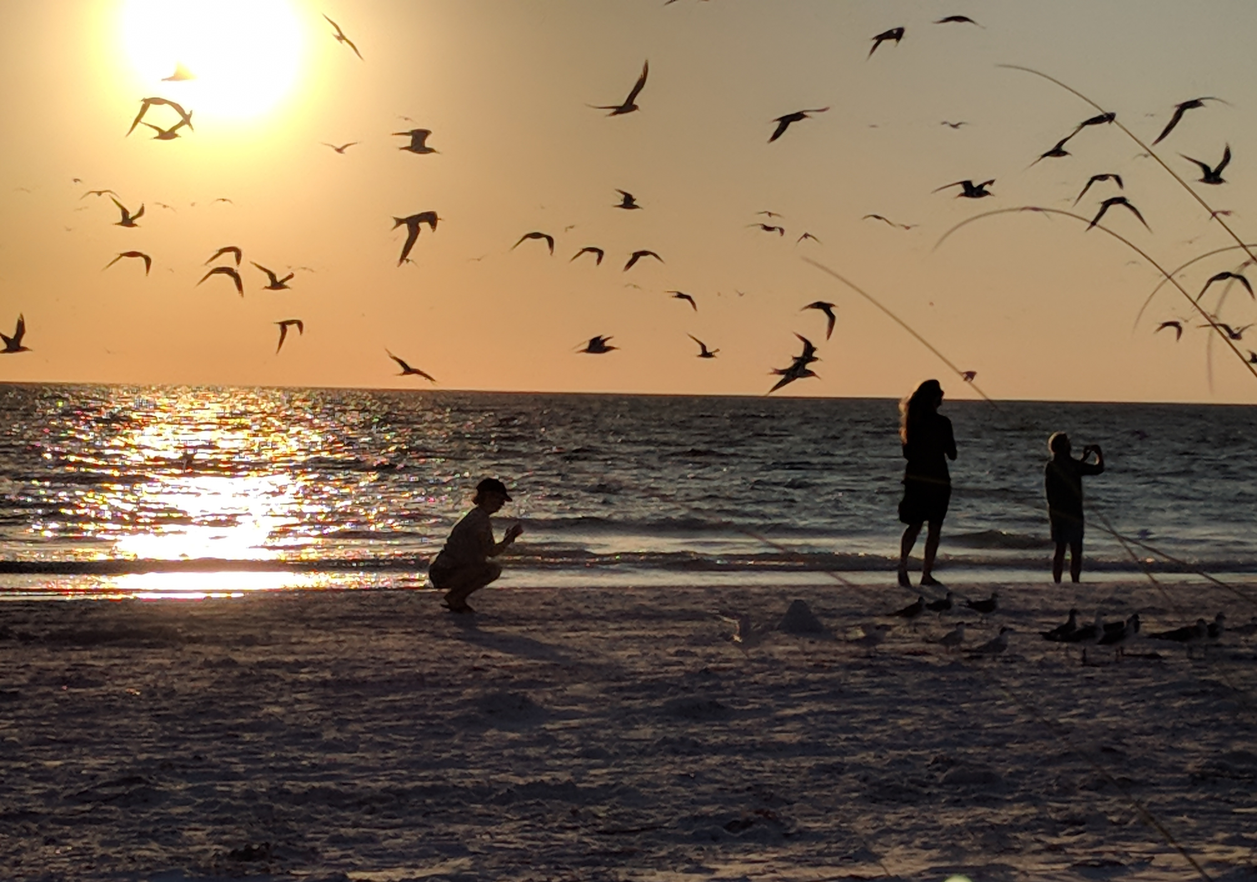 Two women stand on the sand of gulf coast with sun setting over the water as seagulls fly overhead