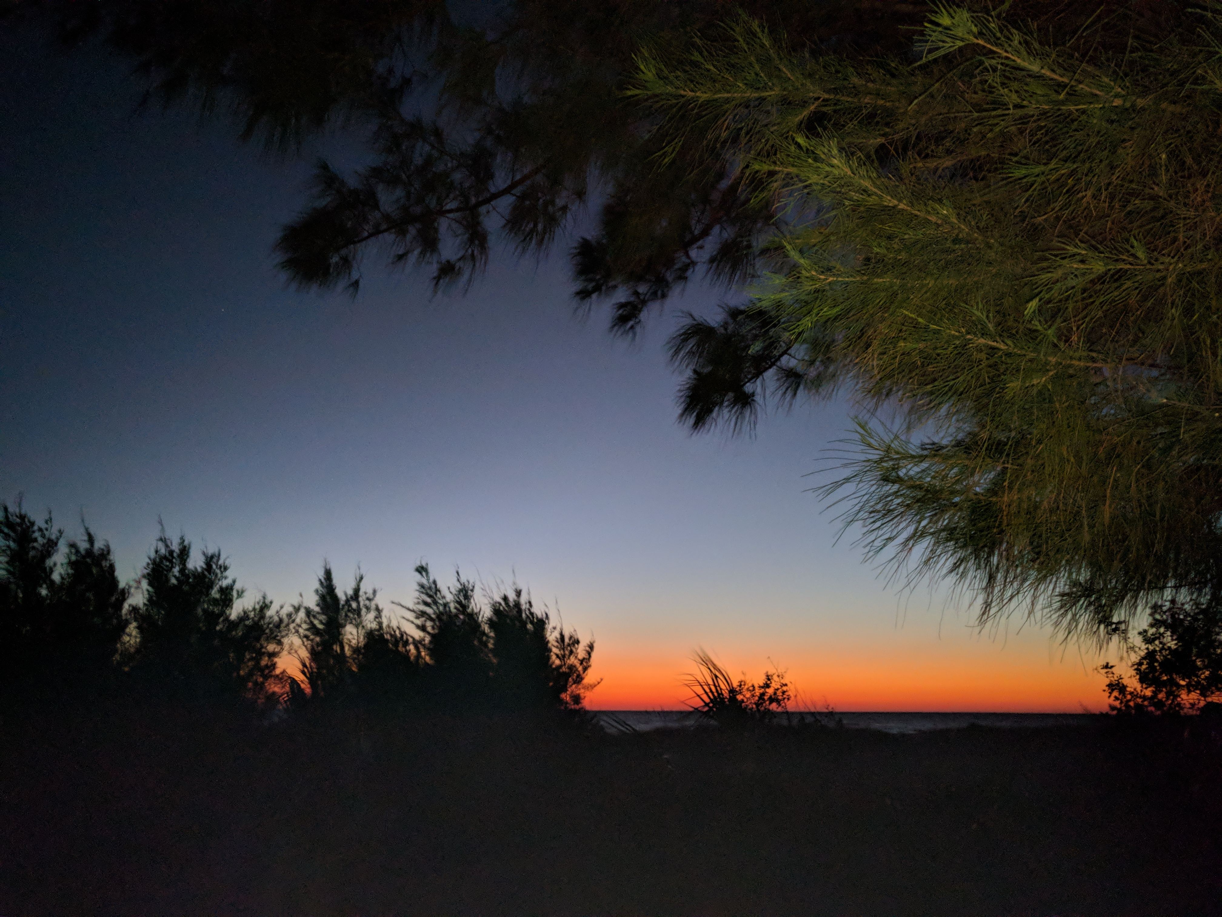 The sun sets undre a blue and pink sky with a pine tree in the foreground of the west coast of Florida in Anna Maria Island