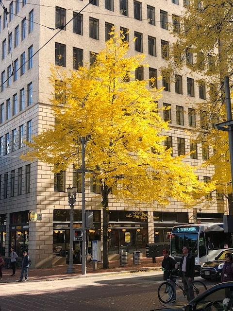 A blooming tree with yellow leaves in front a beige brick building in downtown Portland Oregon.